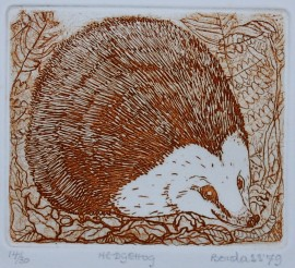 Dorothy Bordass Hedgehod etching